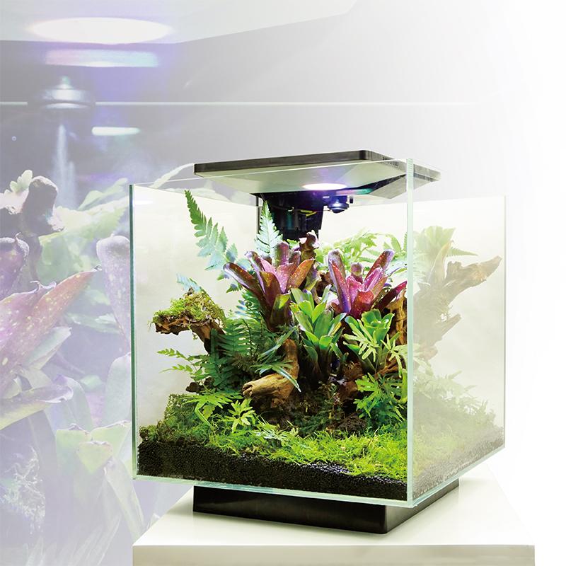 珍惜植物系列SP2626